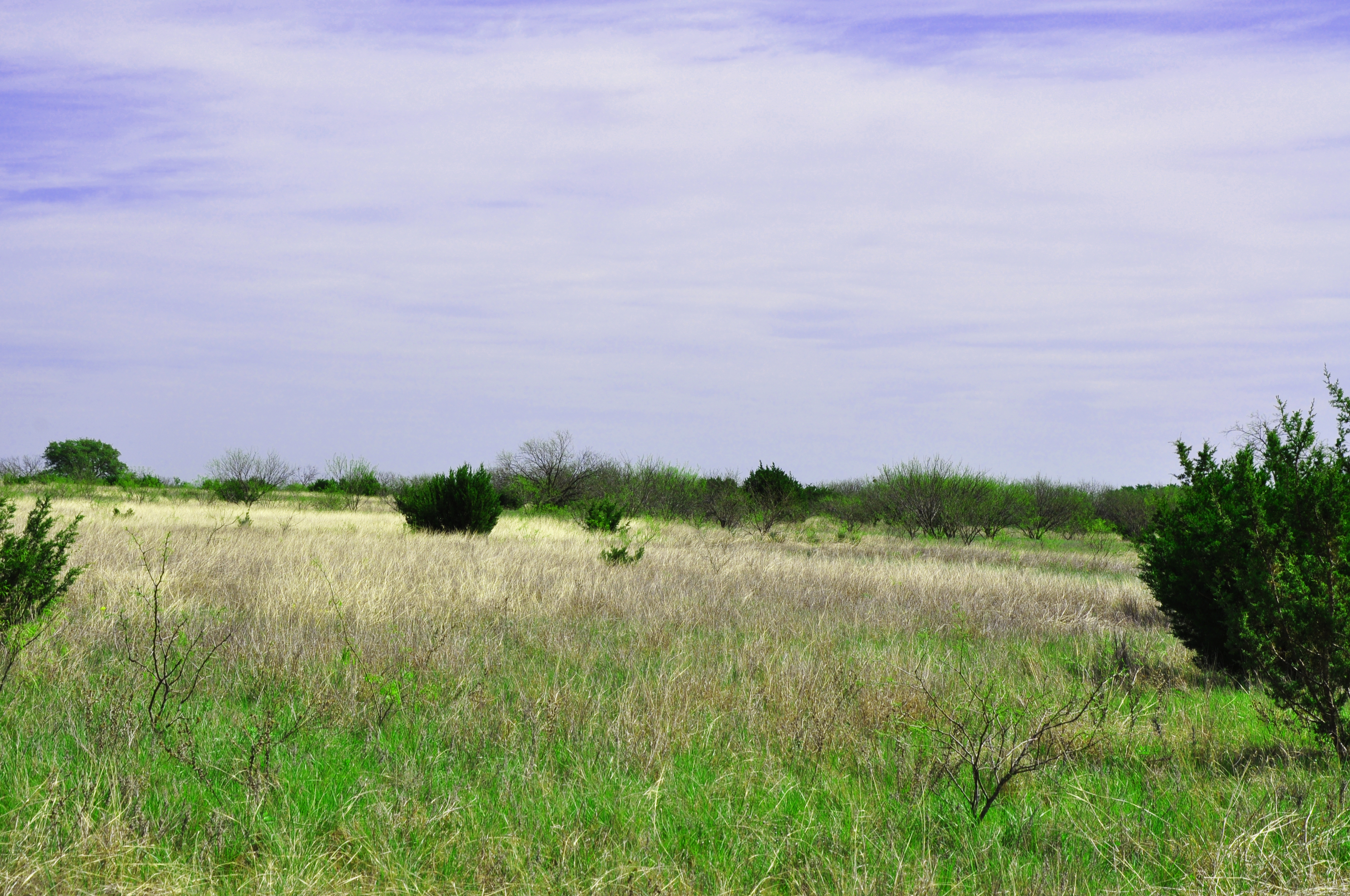 Coleman Live Oak Ranch Photo Thumbnail